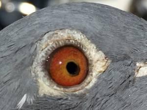 17-3730915-eye